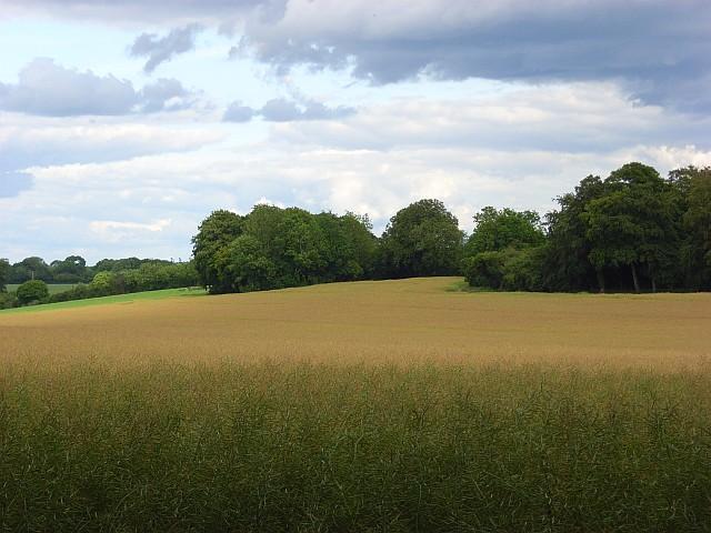 Farmland, Newton Tony