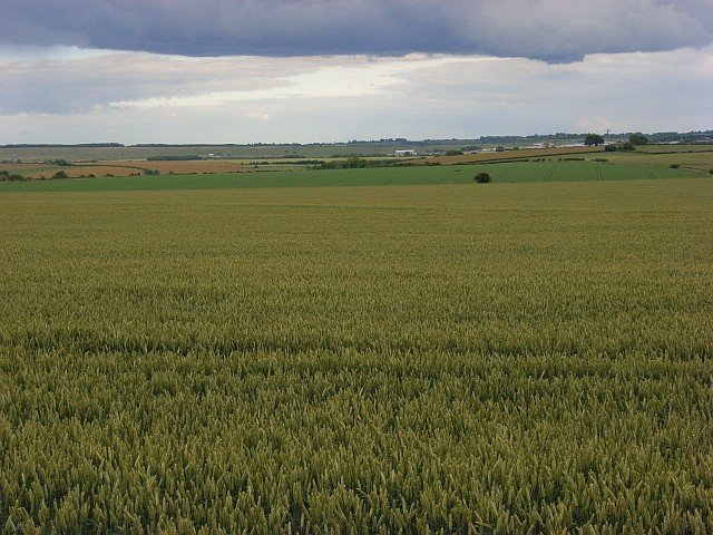 Farmland, Allington
