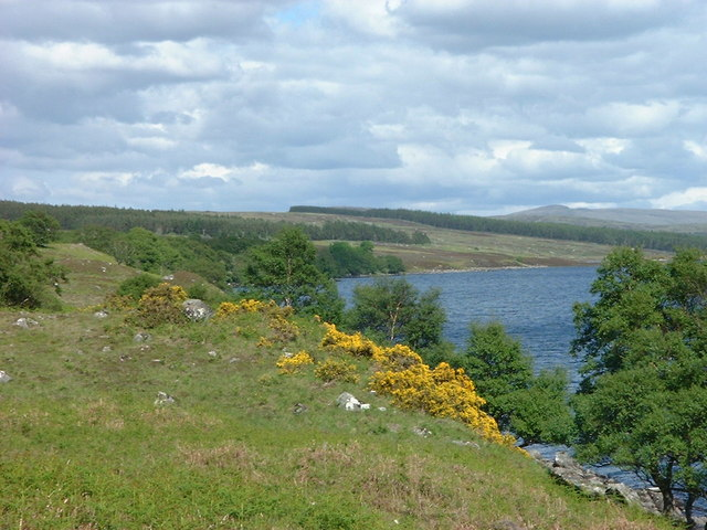 The gorse is in bloom by Loch Naver