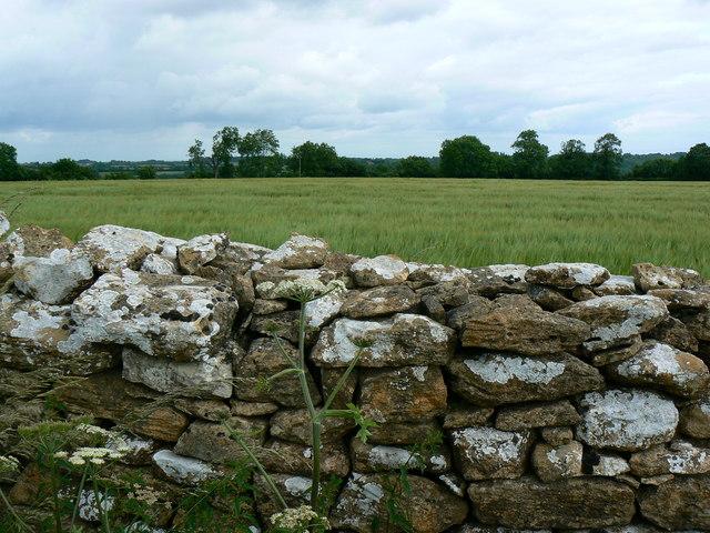 Drystone wall near St Catherine