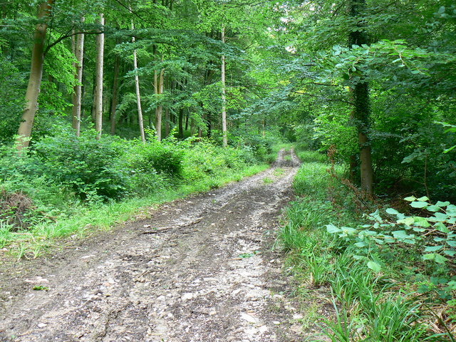 Track in Marshfield Wood