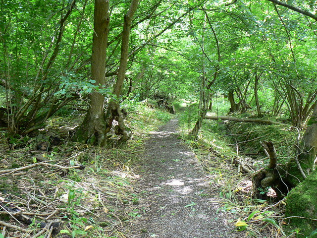 The Cotswold Way, inside Dyrham Wood