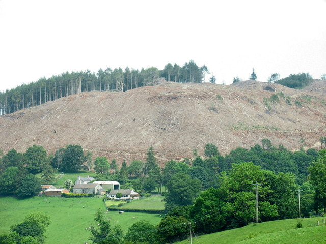 Forest clear fell on the western slopes of Pen y Garth