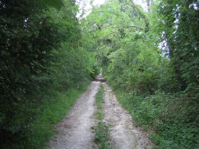 Byway near Buckholt Farm