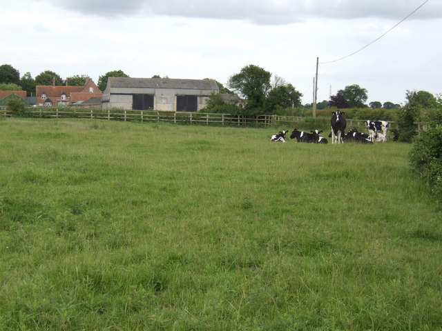 Dairy cattle at Great Palgrave Farm