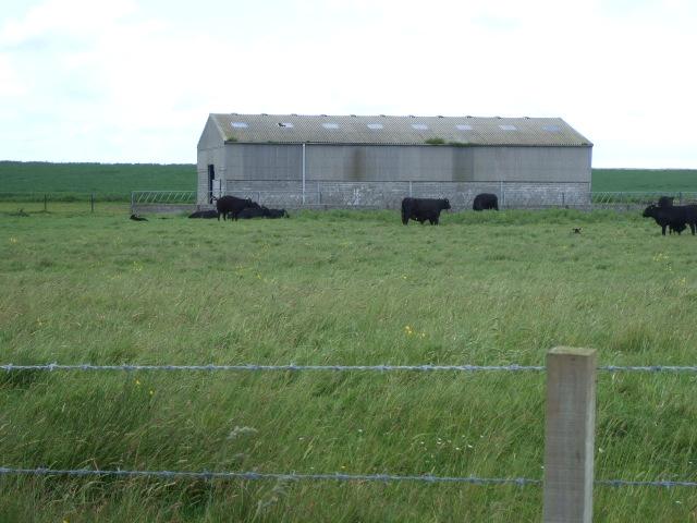 Barn near Killimster