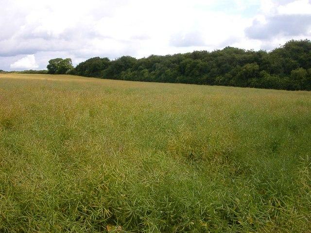 Harborough Fields