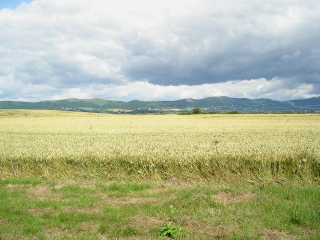 Corn field and the Malvern Hills