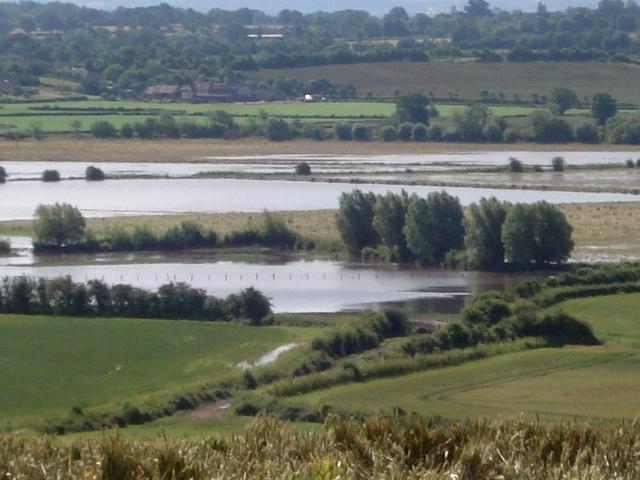 Close-up of summer floods at Longdon Marsh