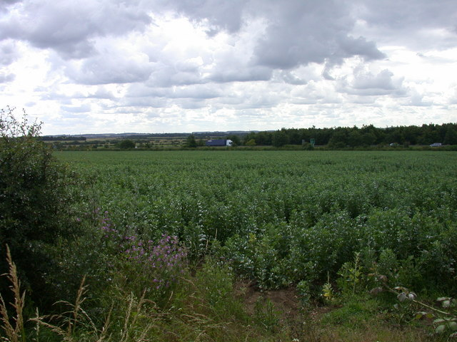 Bean field with A14 backdrop