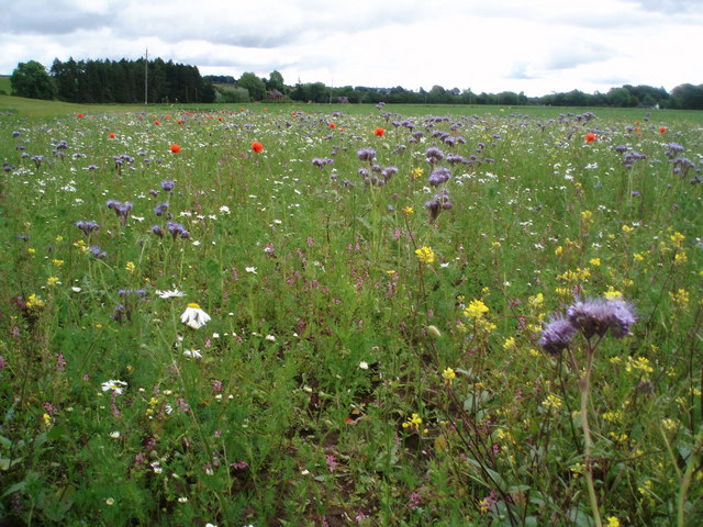 Wild flowers on uncultivated land