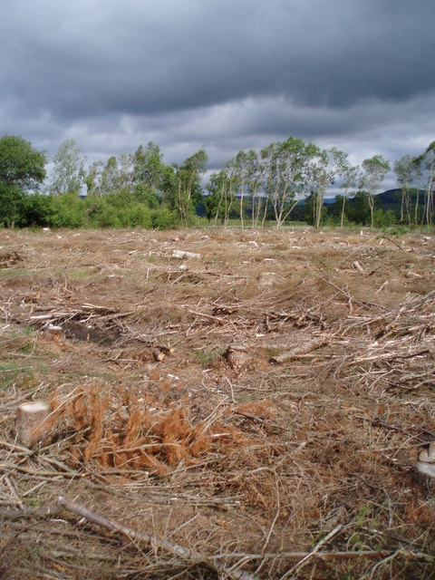 Felled forestry close to East Bog