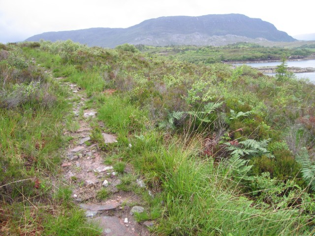 Pathside vegetation