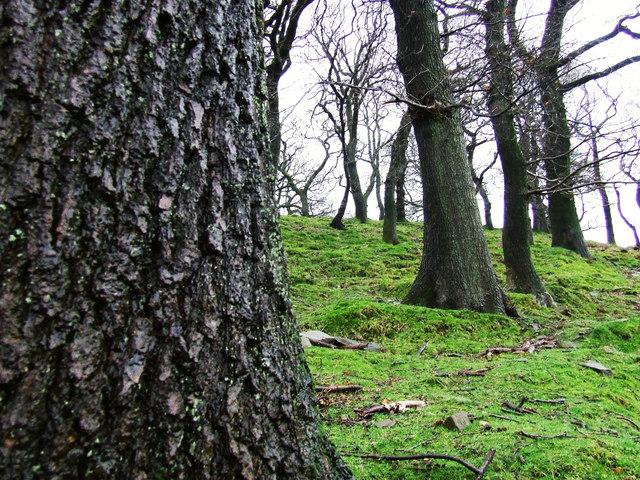 Woodlands in Dyffryn.
