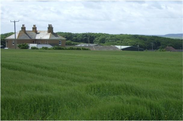 Barrogill Mains farm