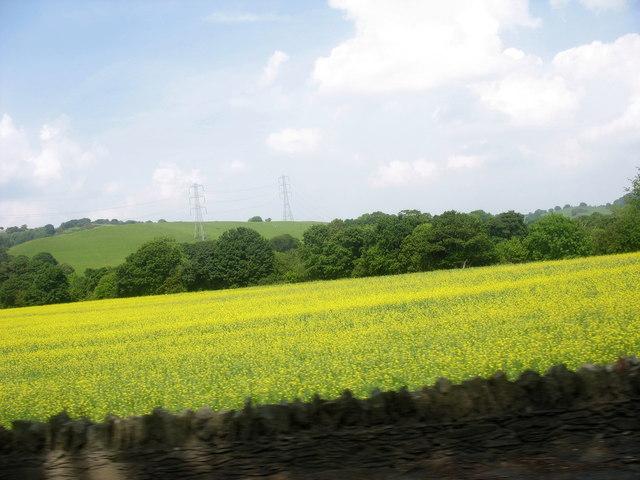 A field of oil-seed rape at Druid