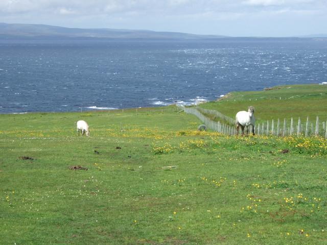 Horses by St John's Point