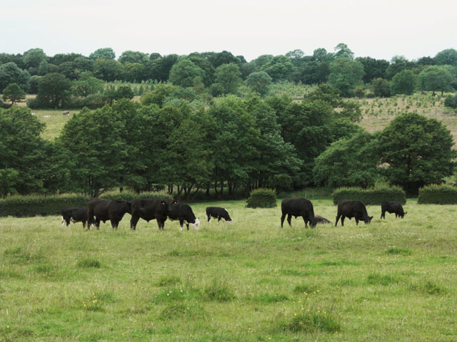 Farmland near Field House