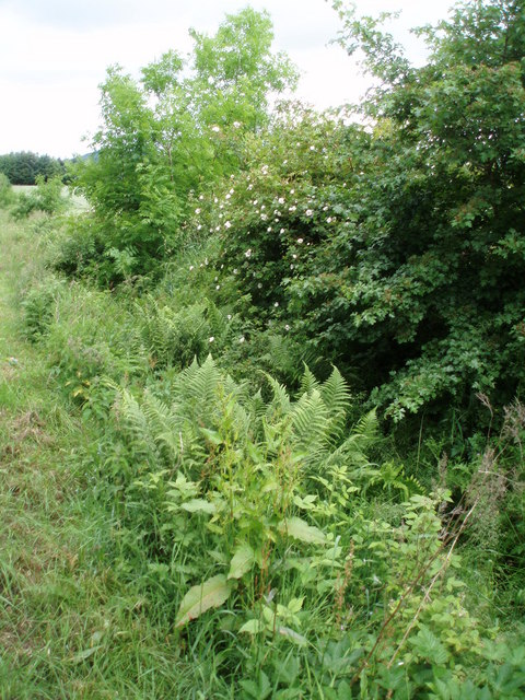 Ditch at the side of the road