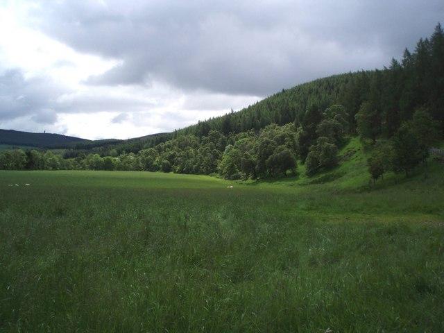 Lush grazing in Glen Prosen