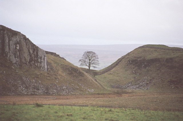 Sycamore Gap - from the north