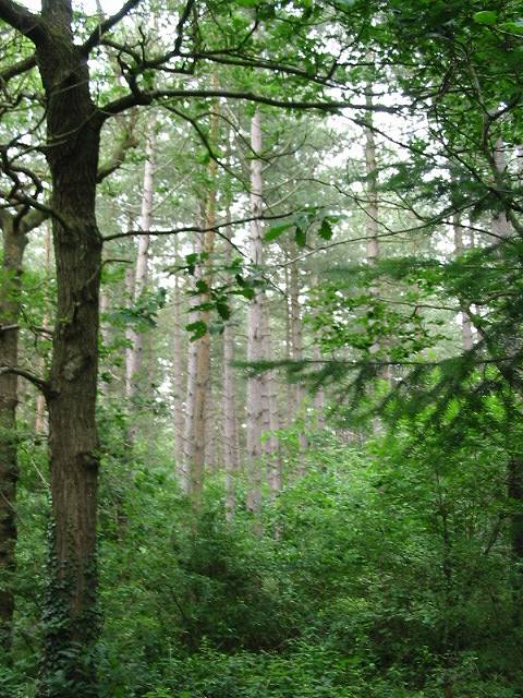 Trees in West Blean and Thornden Woods