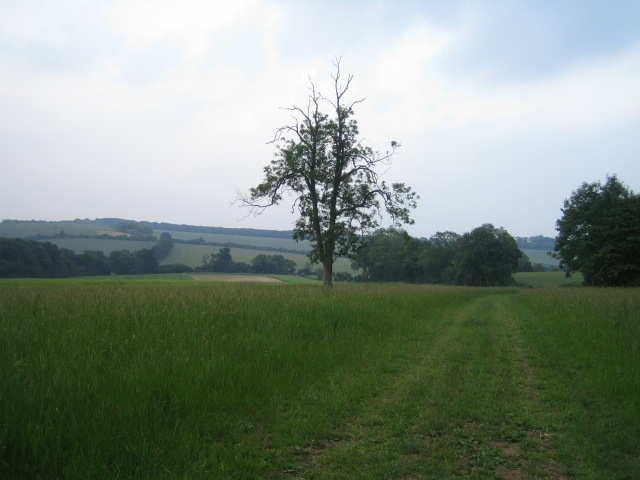 Fields and trees near Buckholt Farm, Buckholt