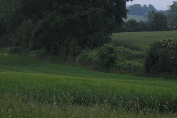 Deer near Buckholt Farm, Buckholt