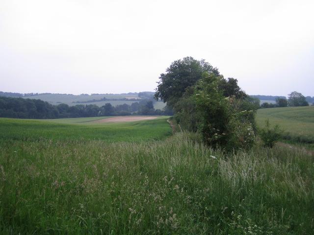Fields and hedgerow near Buckholt Farm, Buckholt