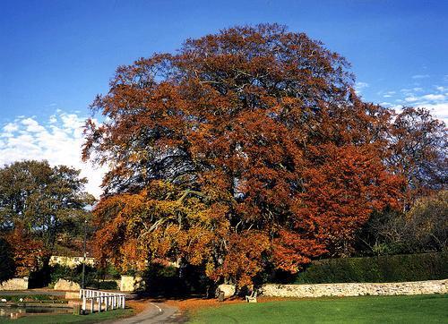 Brantingham Tree