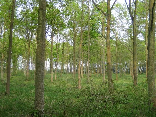 Hewin's Wood near Greatmoor