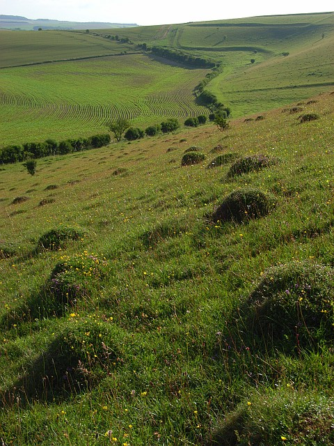 Downland, Little Langford