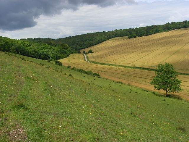 Downland, Great Wishford
