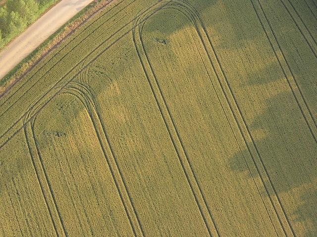 Crop markings - Hop Farm, Beltring