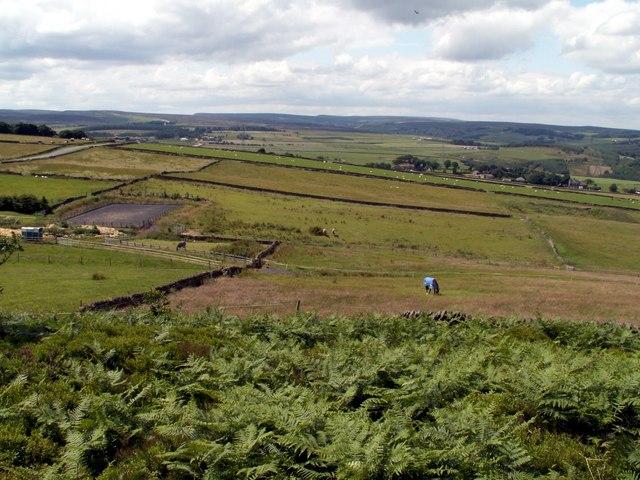 Hartcliff Hill Bridleway looking to Moor Royd