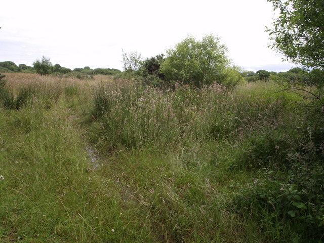 Venton Moor