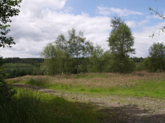 Dowland Moor