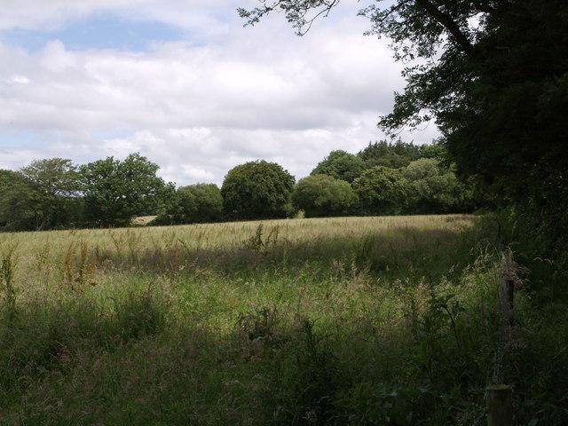 Field beside Stafford Road