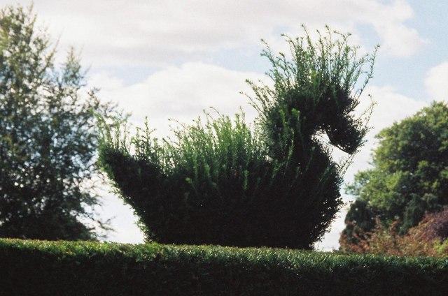 Bird in the bush, Kingston Maurward gardens