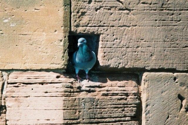Pigeon-hole
