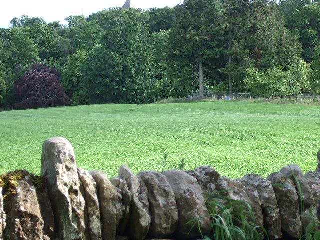 Dunrobin Castle woods