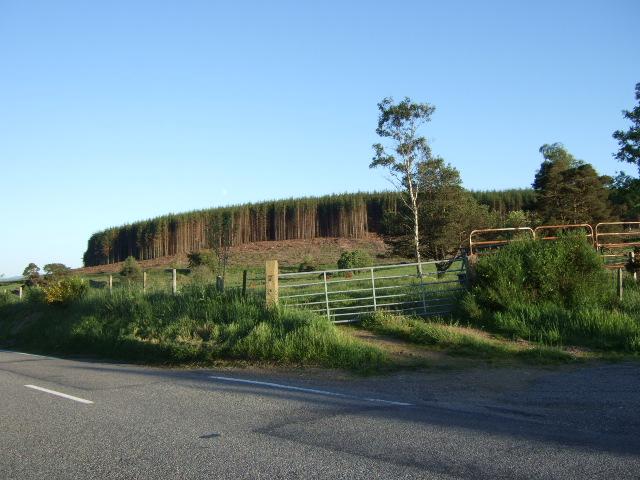 Heathcote Wood