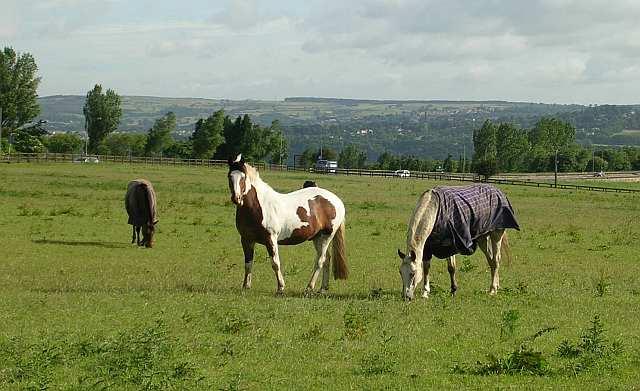 Horses in field off Priesthorpe Road