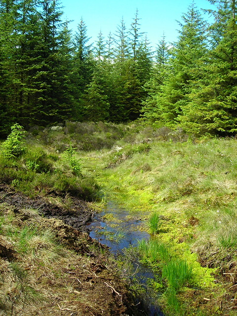 Boggy Drainage Ditch in Whitelee Forest