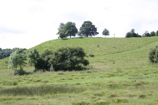 Commemorative Trees on Hill Top, Coombe Green