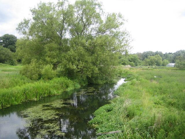 River Beane near Bengeo
