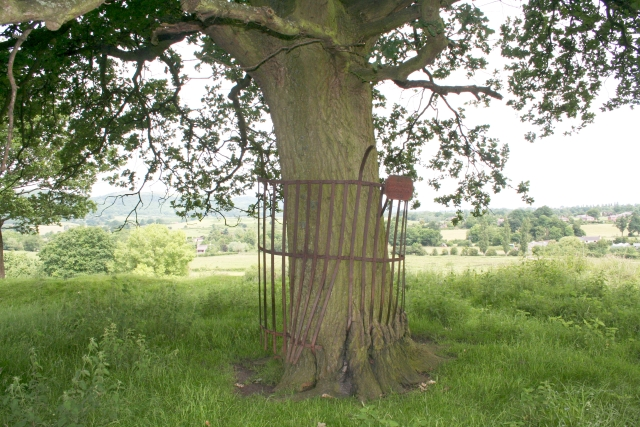 Trunk of Commemorative Oak, Coombe Green