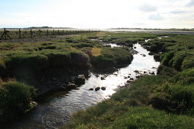 Salt Marsh in Scarth Bight
