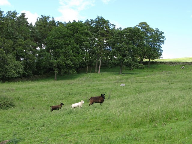 Pasture and wood below Harlow Bower