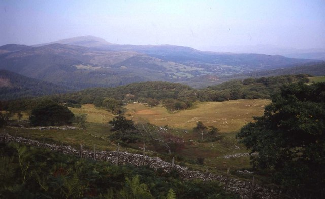 Rough grazing and forest above Hafod-y-fedw